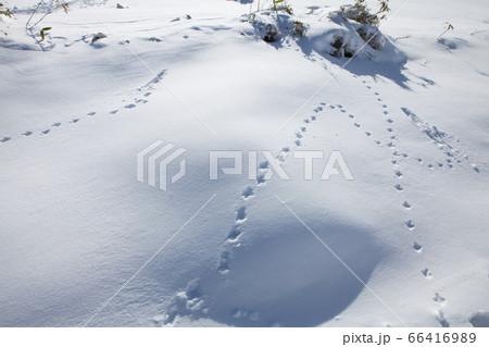 立山の雪景色(ライチョウの足跡) 66416989