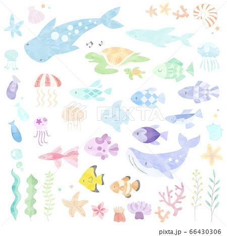 水彩風の海の生き物のイラストセット 66430306