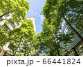 ビルを見上げる緑の多いオフィス街の風景 66441824