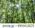 森林と木漏れ日 66441825