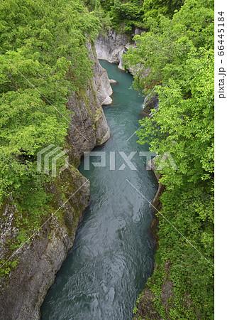 手取峡谷 黄門橋からの眺め(石川県白山市) 66445184
