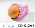 新鮮で美味しいマンゴー 66461294