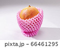 新鮮で美味しいマンゴー 66461295