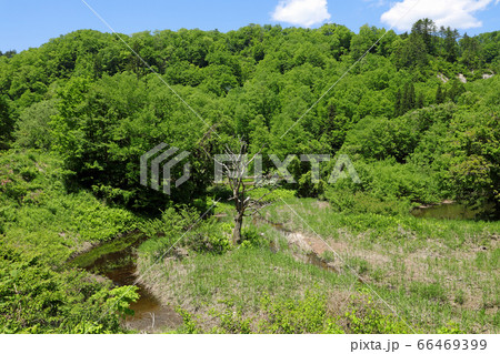 布沢川源流の新緑と流れ 福島県只見町 66469399