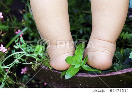 植木鉢に乗っている赤ちゃんの足と植物 66475514