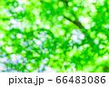 森林 玉ボケ 66483086