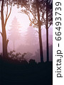 Natural forest mountains horizon hills silhouettes of trees. Evening Sunrise and sunset. Landscape wallpaper. Illustration vector style. Colorful view background. 66493739