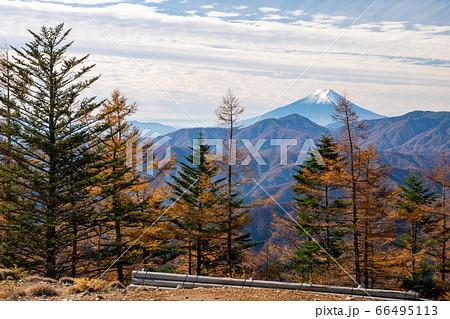 雲取山から眺める秋のカラマツと富士山 66495113
