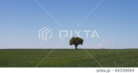 風景 自然 66509064