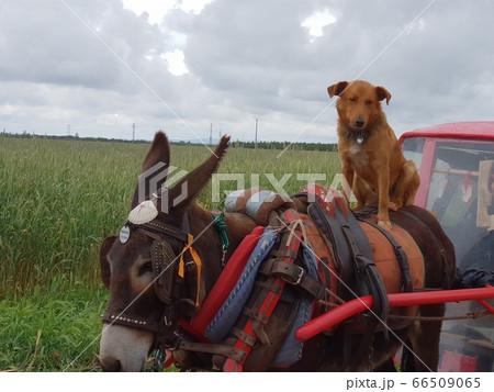 動物 犬 子犬 66509065