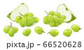 Green apple and grapes set isolated on white background 66520628