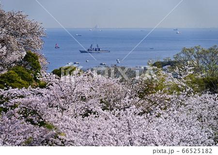 桜と護衛艦【神奈川県立塚山公園】船ピント 66525182