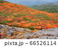 岩手県の三ツ石山の山頂から見下ろした絨毯を敷き詰めたような紅葉 66526114
