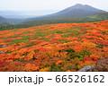 美しく色づいた三ツ石山の紅葉越しに望む岩手山 66526162