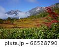 栂池自然園から見た紅葉と白馬岳の大雪渓と紅葉 66528790