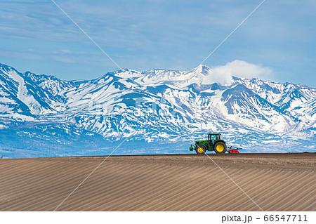 耕し始めの美瑛の大地と残雪の山々 66547711