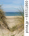 View over the sea from dunes covered in lyme grass 66551860