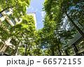 ビルを見上げる緑の多いオフィス街の風景 66572155