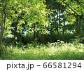 緑の風景 66581294
