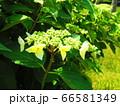 緑の植物 66581349