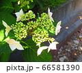 緑の植物2 66581390