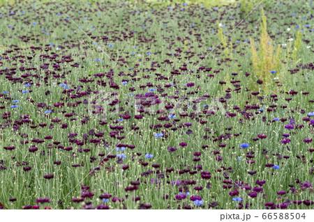 風景 自然 韓国 66588504