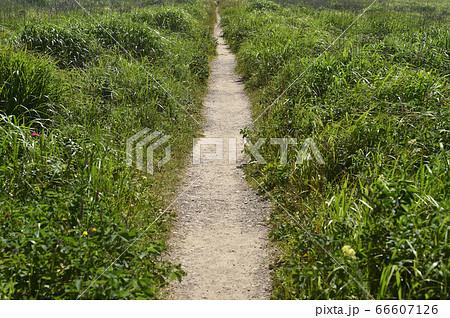 一直線の遊歩道(夏の野付半島・北海道) 66607126