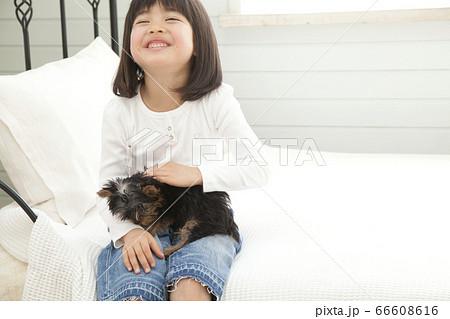ヨークシャーテリアを抱く笑顔の女の子 66608616