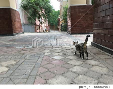 【ウラジオストック】街並みと猫ガイド 66608901