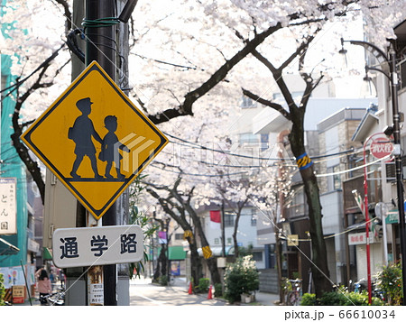 通学路の道路標識と桜並木のある商店街 66610034