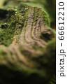 水の中の苔むした木 66612210