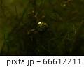 泡の中で光る緑の葉っぱ 66612211