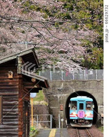 トンネルを抜け日当駅にやって来た「樽見鉄道」の列車風景 66629732