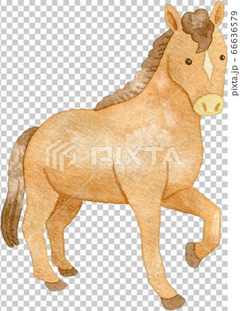 馬抬起一條腿 66636579