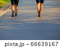 Road for jogging in the park 66639167