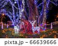 クリスマスイルミネーション 小笠原 父島⑵ 66639666