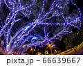 クリスマスイルミネーション 小笠原 父島⑶ 66639667