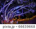 クリスマスイルミネーション 小笠原 父島⑷ 66639668