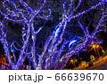 クリスマスイルミネーション 小笠原 父島⑸ 66639670