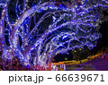 クリスマスイルミネーション 小笠原 父島⑹ 66639671