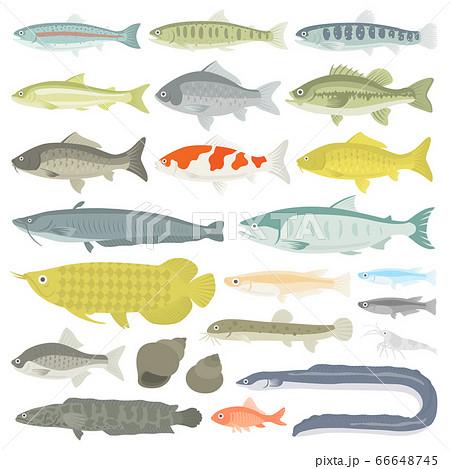 淡水魚のイラストセット 66648745