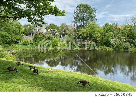 アメリカの郊外住宅地:ケントランズの街並み 66650849