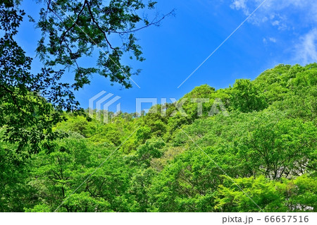 新緑に包まれた赤目四十八滝渓谷の情景@京都 66657516