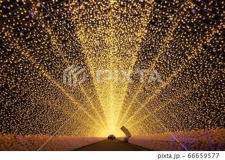 光のトンネル(三重県・なばなの里) 66659577