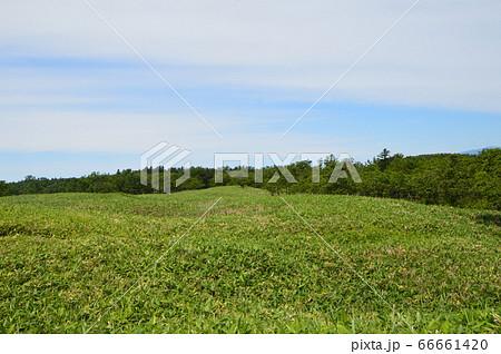 美しい高層湿原(知床五湖・一湖付近/北海道斜里郡斜里町) 66661420