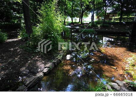 6月 国立37水辺デッキ・谷保の城山公園 66665018