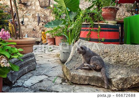 クロアチア・ドブロブニク旧市街に住む猫 66672688