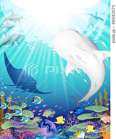 輝く青い海とそこに暮らす野生動物たち 66682075