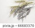 麦とラベンダーのドライフラワー 66683370