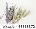 麦とラベンダーのドライフラワー 66683372